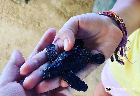 Sea Turtle Conservation Project (Koggala)
