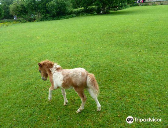 Miniature Pony Centre4