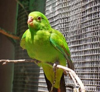 巴拉臘特鳥的世界