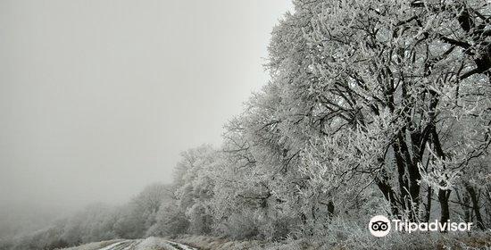 Hoia Baciu Forest4