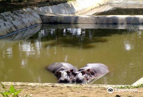 Sipahijala Wildlife Sanctuary