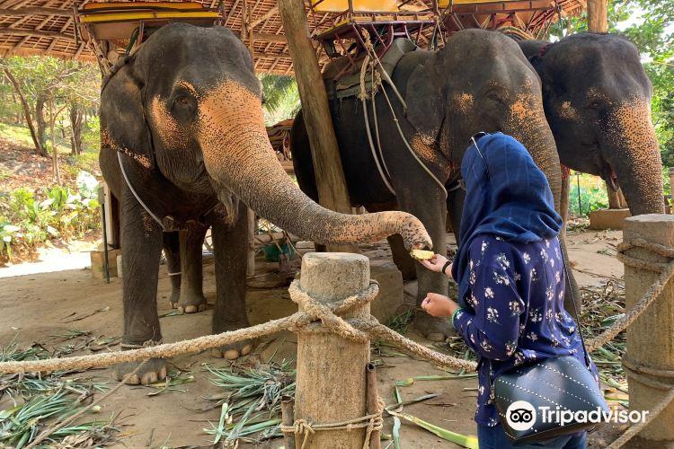 KokChang Safari Elephant Trekking4