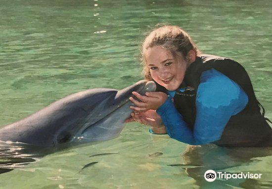 Dolphin Quest2