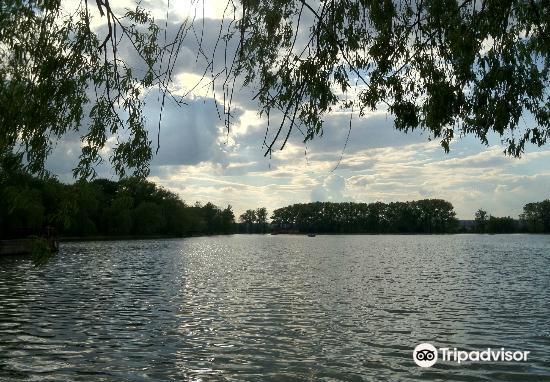 Town Lake3