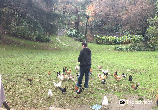 Katikati Bird Gardens4