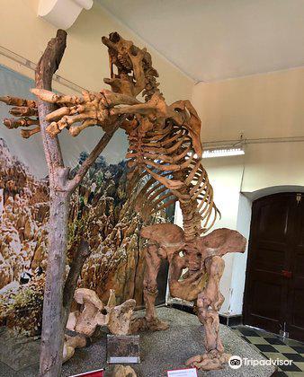 Museo Paleontologico y Arqueologico3