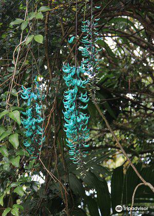 Hana Maui Botanical Gardens4