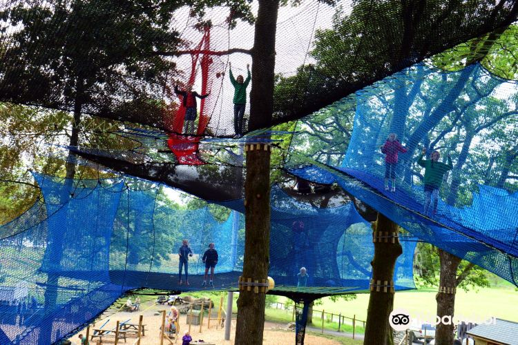 Treetop Nets2