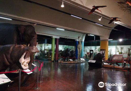 Natal Museum4