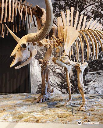 Natural History Museum of Utah1