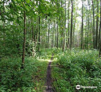 Bialowieski Park Narodowy