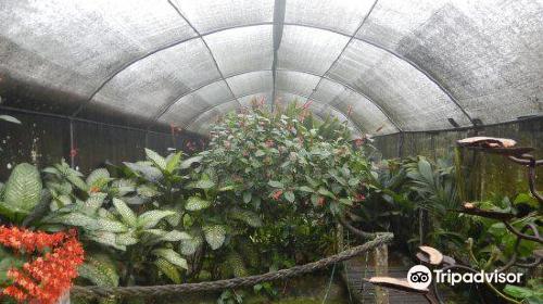 Snake Garden