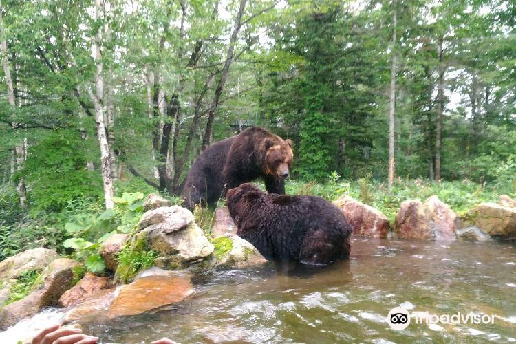 Sahoro Bear Mountain3