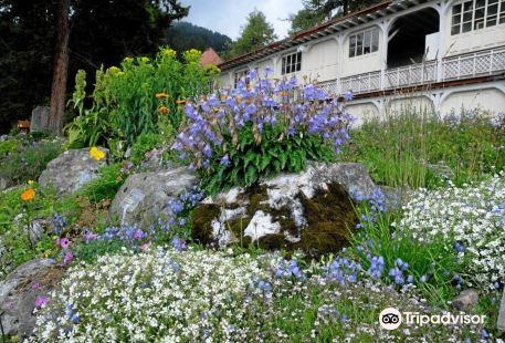 Botanical Garden Alpinum Schatzalp