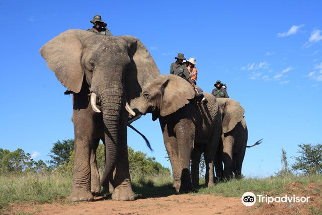 Addo Elephant-Back Safaris and Lodge2