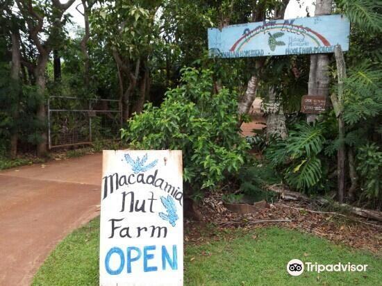 purdy's macadamia nut farm3
