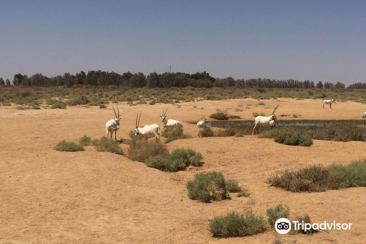 Shaumari Nature Reserve4