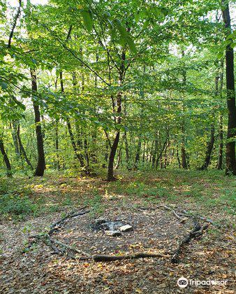 Hoia Baciu Forest3