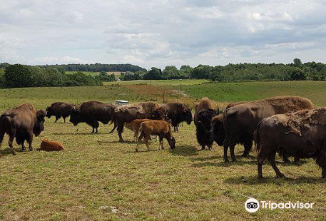 Ditlevsdal Bison Farm