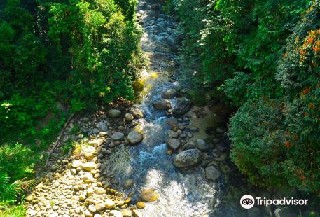 Sungai Sedim Recreational Forest