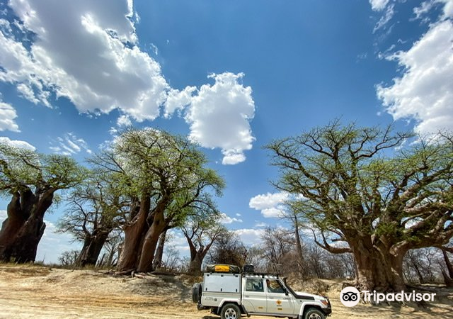 Baines Baobabs2