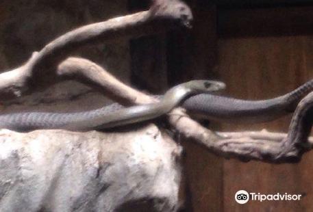 Ndlondlo Reptile Park