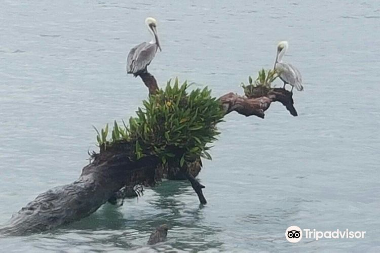 Isla Bastimentos National Marine Park2
