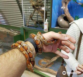 Lawnwood Snake Sanctuary