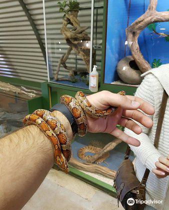 Lawnwood Snake Sanctuary