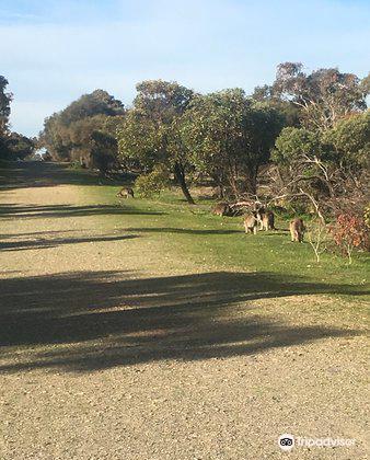 Aldinga Scrub Conservation Park3