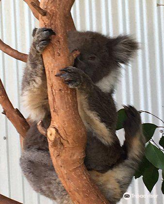 Kangaroo Island Wildlife Park4