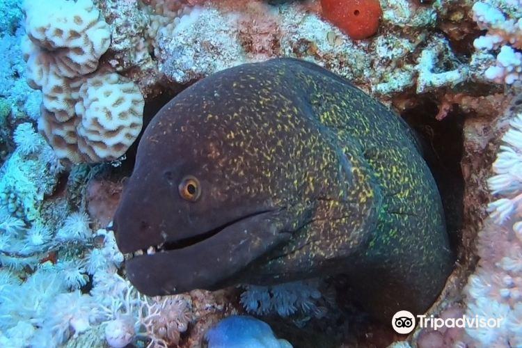 傑克遜礁1