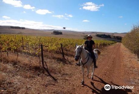 Horse Riding Cape Town