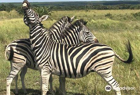 iMfolozi Game Reserve