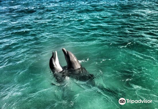 Dolphin Discovery Anguilla1