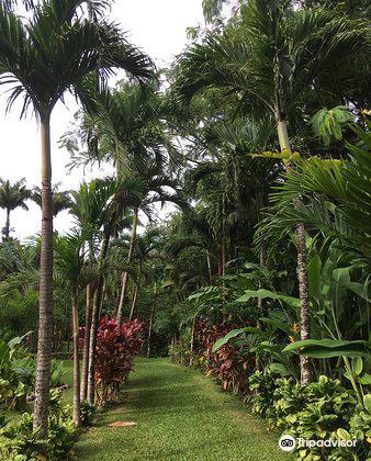Maire Nui Botanical Gardens3