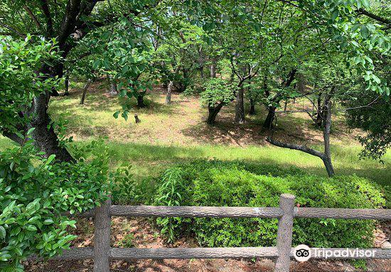 Mt. Hachiman Tomb1
