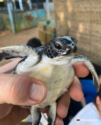 Ahungalla Sea Turtles Conservation And Research Center2