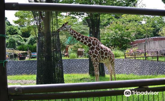 Omoriyama Zoo4