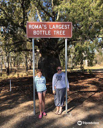 Roma's Biggest Bottle Tree3