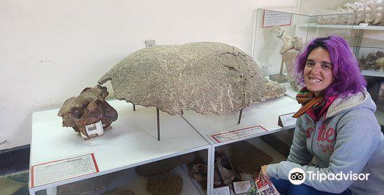 Museo Paleontologico y Arqueologico2