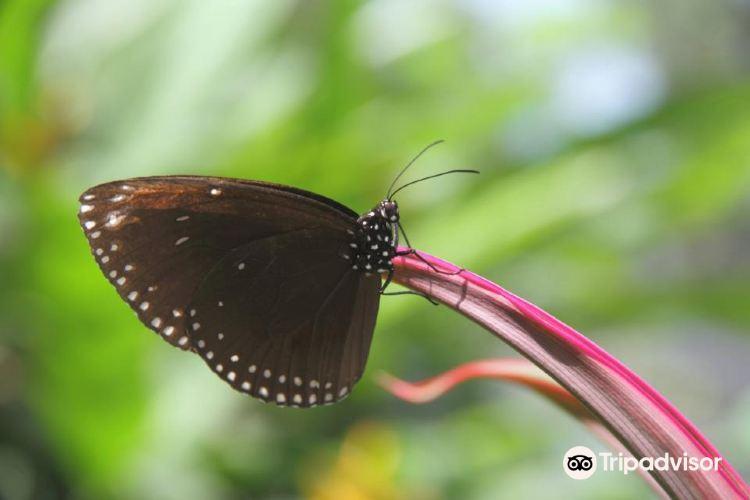 蝴蝶園與昆蟲王國