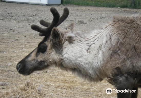 Reindeer Ranch2
