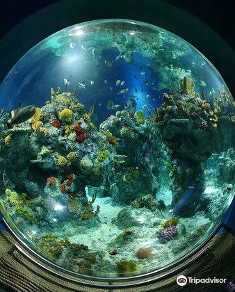 Bristol Aquarium2