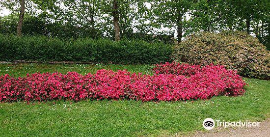 Rhododendronparken2