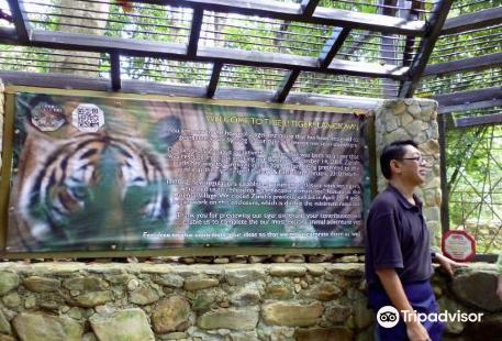 Tiger! Tiger! Gallery & Exhibit