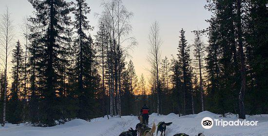 Lapland Safaris Luosto4