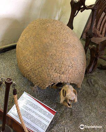 Museo Paleontologico y Arqueologico4