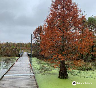 Henry N Barkhausen Cache River Wetlands Center