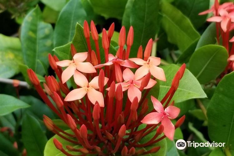 Maire Nui Botanical Gardens4